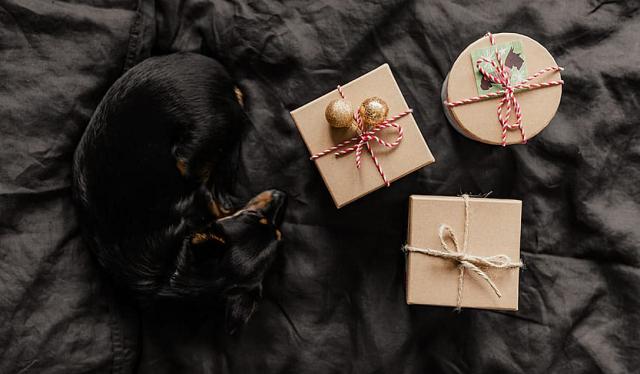 pies i prezenty