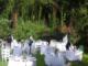 Koszt ślubu w plenerze