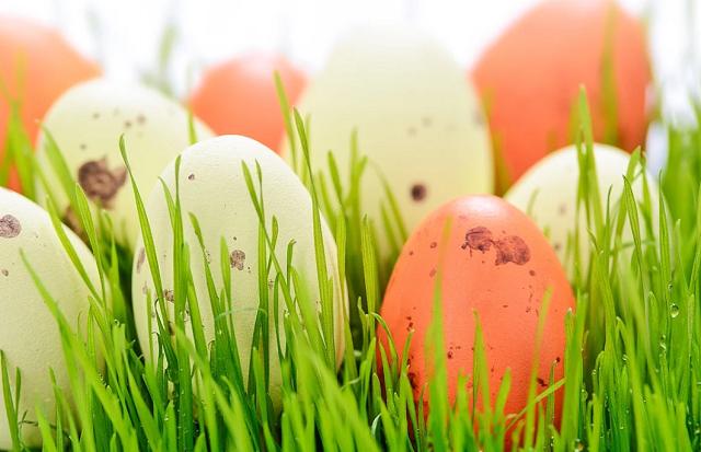 kurze jajka leżą w trawie