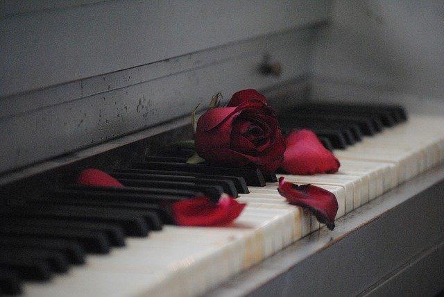 róża i jej płatki leżące na klawiszach pianina