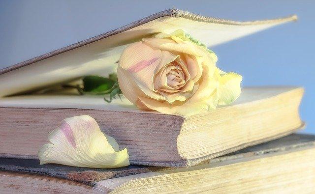 kremowa róża włożona w książkę