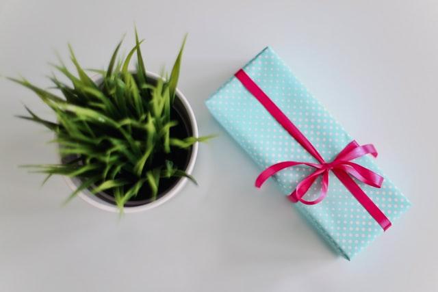 niebieski prezent zapakowany w czerwoną wstążkę obok kwiatka doniczkowego