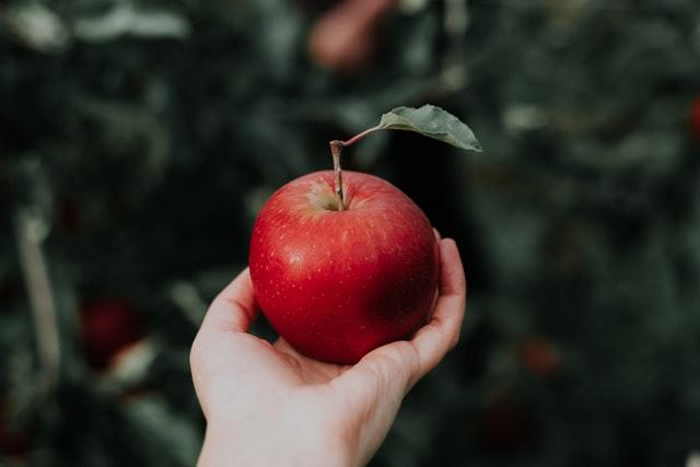 czerwone jabłko trzymane w dłoni na tle sadu