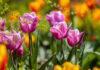 5 pomysłów na odświeżenie ogrodu na wiosnę