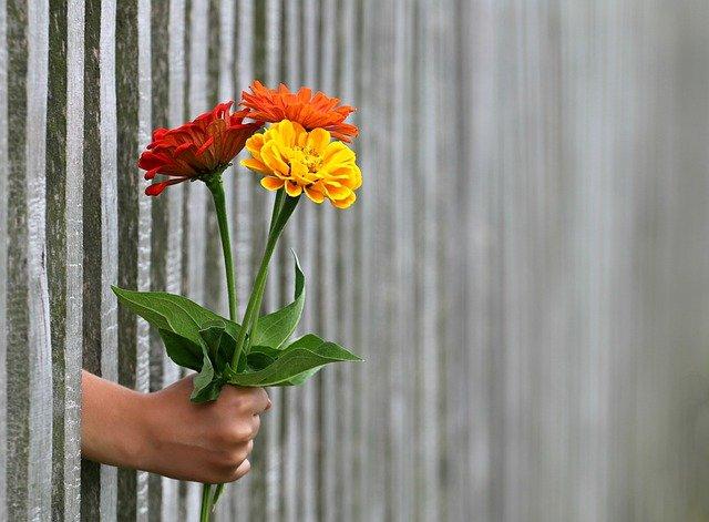 wystająca ręka z płotu, która trzyma czerwone i żółte kwiatki