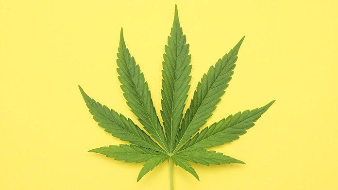 Lecznicze właściwości marihuany