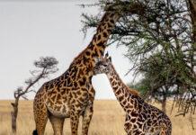 Safari w Tanzanii i plaże Zanzibaru z CARTER®